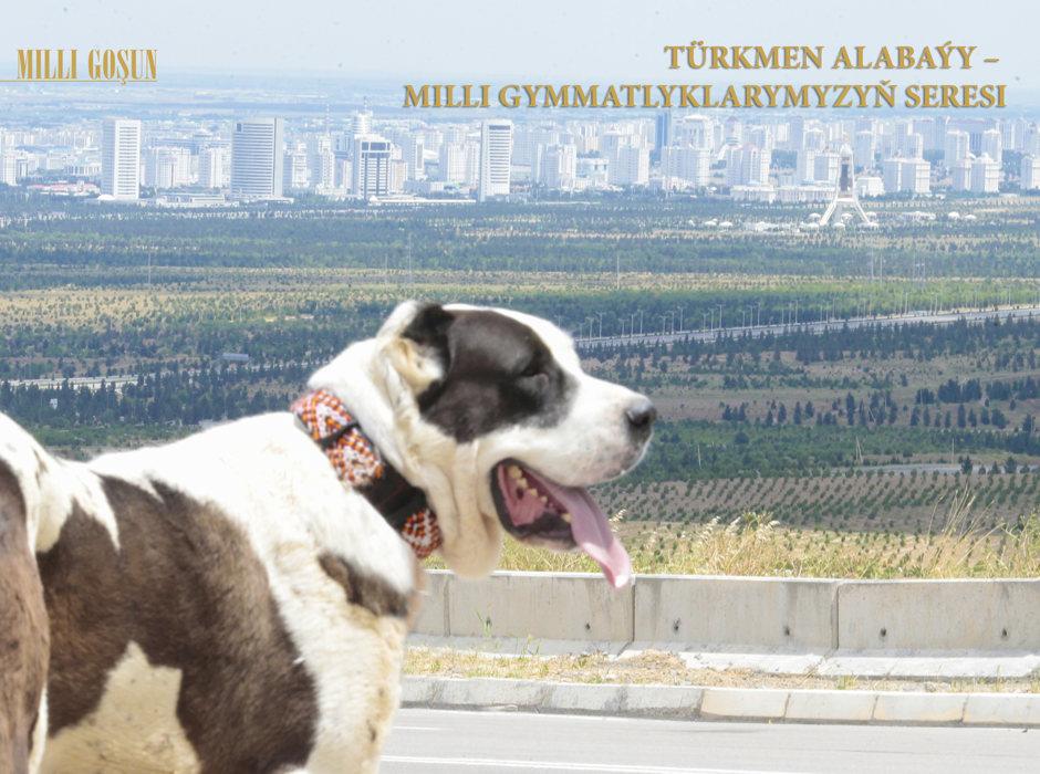 Türkmen alabaýy – milli gymmatlyklarymyzyň seresi